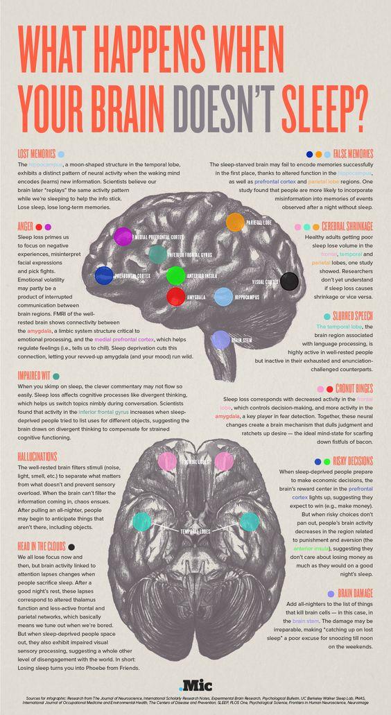 brain no sleep