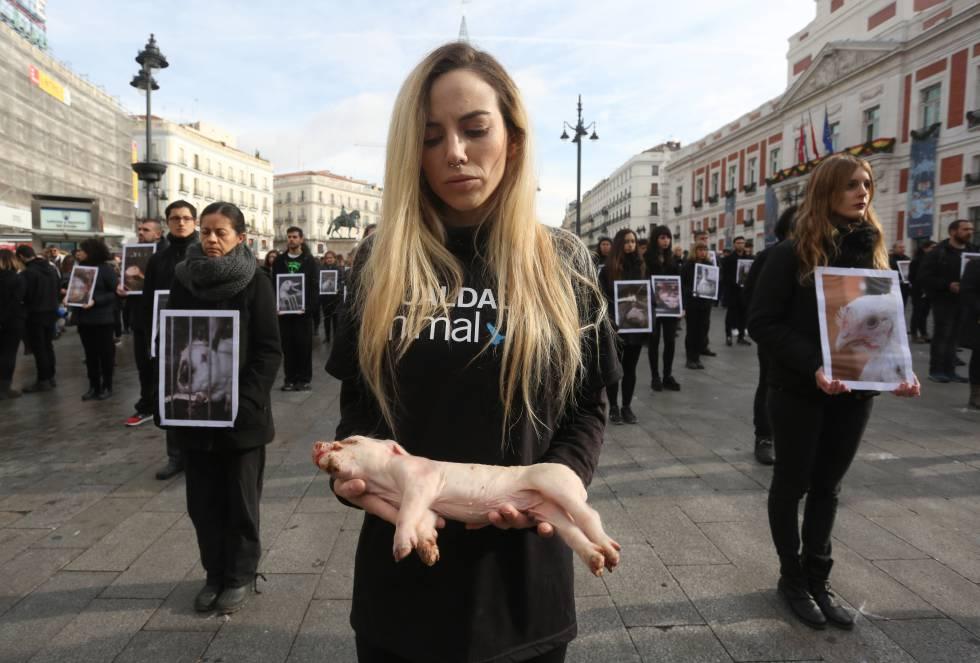 Frases Animalistas Cortas Contra El Maltrato Animal De